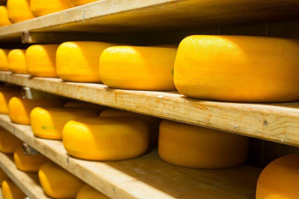 תארזו לי בבקשה גלגל גבינה כזה לפיקניק. משק יעקבס (צילום: הדס ניצן)