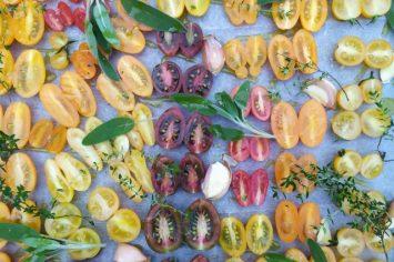 בדרך לסיני עוצרים בעין יהב לקטוף עגבניות שרי (וגם מתכון לעגבניות לחות מושלמות)