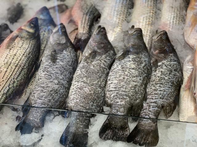 """דידי דג, אבן גבירול ת""""א. צילום: דקלה חוסטיק"""