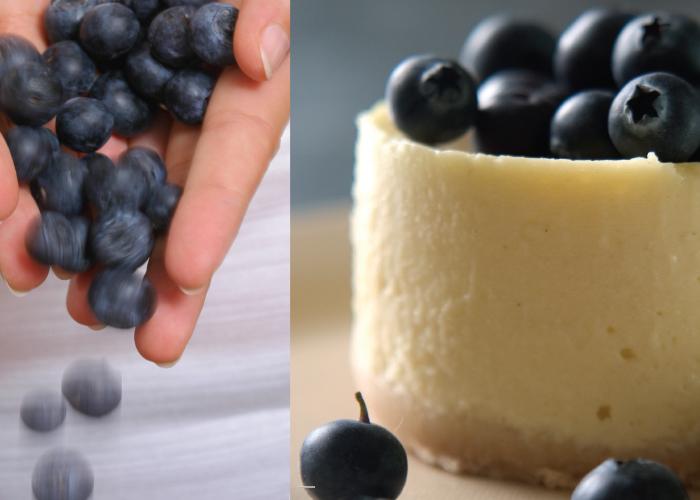עוגת גבינה ושוקולד לבן עם אוכמניות. צילום: דניאל לילה